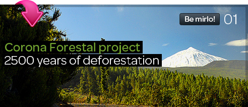 Corona Forestal Project